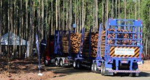 Librelato leva para a Expoforest o tritrem florestal, mais recene lançamento da empresa para o transporte de madeira