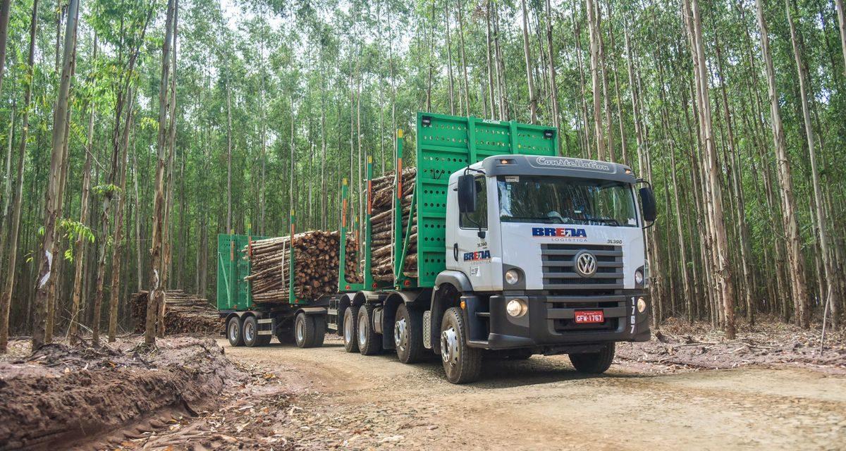 MAN desenvolve o 31.390 em versão 8×4 para o setor florestal