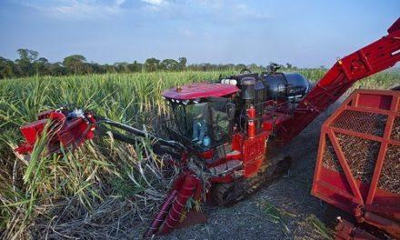 Case IH lidera mercado de colhedoras de cana-de-açúcar